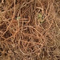 龙王沟艾草种植专业合作社 艾根,质量优,纯净度高