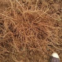 十几亩地试种,需要少量艾根,能指导种植的联系