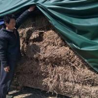 安薇临泉,全棵 艾草 ,是2014年的,前期60吨,中期40吨,价格前期2200元,(每吨价〉,中期每吨1800元,联系我:李新福、手机号:13956709602、18856801368